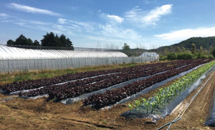 地域のバイオマスを農業資源として有効活用することができる。