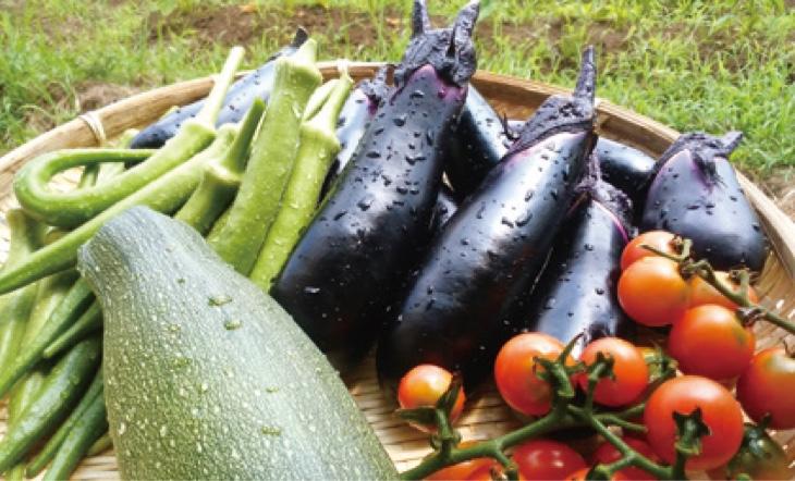 化学肥料だけでは実現できない、「本当に美味しい農作物」ができる。