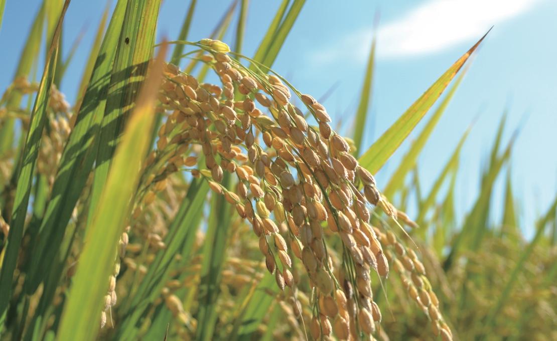 循環型農業事業